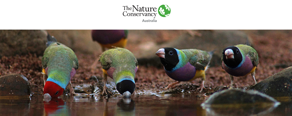 Become A Regular Donor To The Nature Conservancy Australia